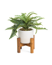 Fern In Round Pot