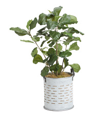 Faux Fiddle Tree In Planter