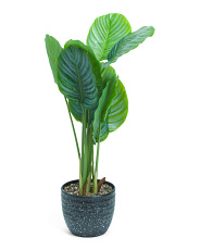 36in Uv Proof Rubber Plant In Ceramic Pot