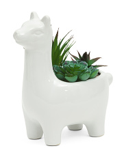 Medium Succulent Mix In Llama Planter