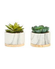 Set Of 2 Marble With Wood Base Succulent
