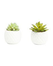 Set Of 2 Pineapple Pot Succulent