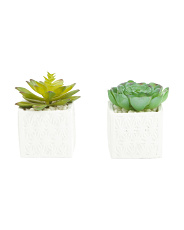 Set Of 2 Succulent In Pattern Cement Pot