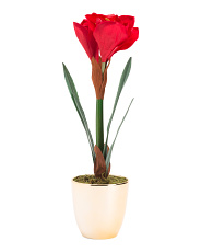 Faux Tall Amaryllis In Plated Pot