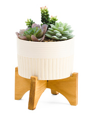 9in Faux Succulent In Footed Stand