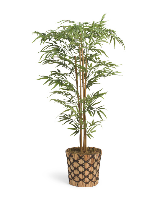 54in Bamboo Potted Plant
