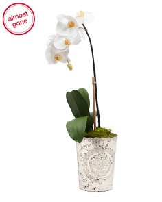 Made In India Orchid in Metallic Pot