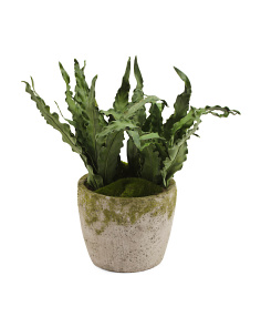 Faux Asplenium Potted Arrangement
