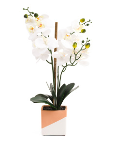 Faux Orchid In Terracotta Dipped Pot