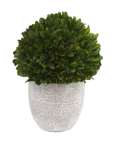 Faux Boxwood In Cement Pot
