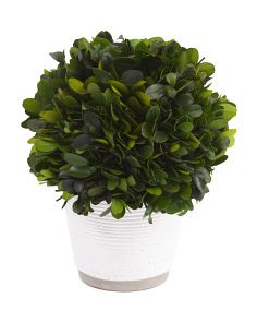 Faux Boxwood In Ceramic Pot