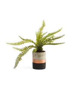 14in Fern In Concrete Pot