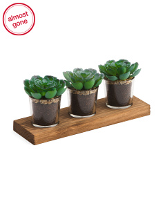 Set Of 3 Faux Succulents On Tray