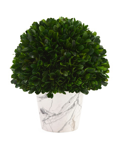 Preserved Boxwood In Marbleized Pot