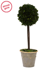 Tall Preserved Boxwood Ball