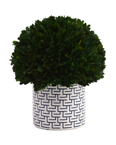 Preserved Boxwood Ball In Ceramic Pot