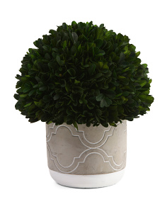 Preserved Boxwood Ball In Pot