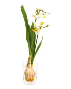 19in Faux Daffodil With Bulb