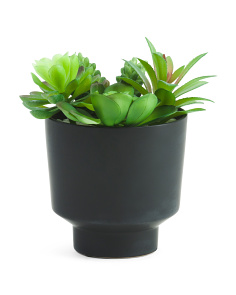 Mix Succulent Garden In Black Ceramic Pot