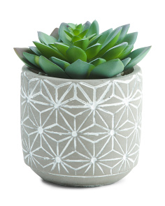 Succulent In Patterned Pot