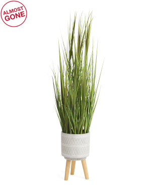60in Onion Grass In Cement Pot With Wooden Stand