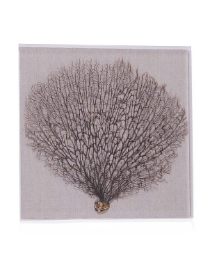 24x24 Real Sea Fan With Acrylic Frame Wall Art