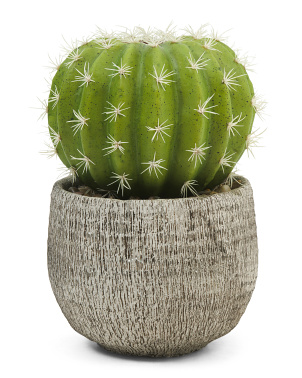 11in Cactus In Cement Pot