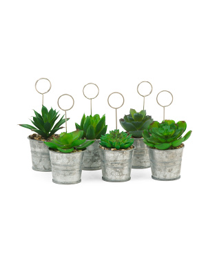 Set Of 6 Table Sign Succulents