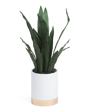 36in Snake Plant In Wooden Stand