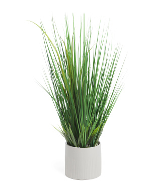 Large Organic Grass In Lined Pot