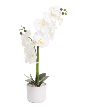 24in Orchid In Round Ceramic Planter