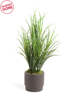 Grass In Modern Matte Pot