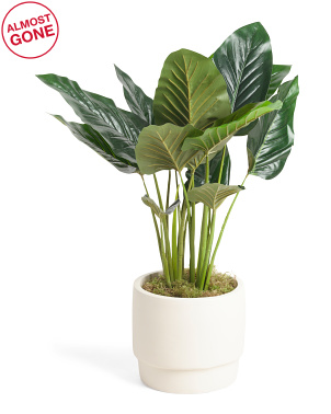 24in Philo Plant In Matte Raised Modern Pot