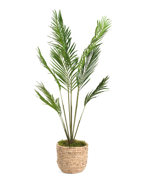 Areca Palm In Woven Basket