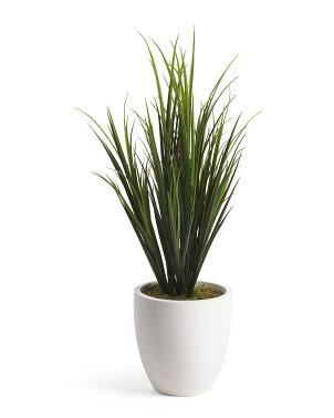 Grass In Tapered Pot