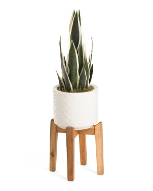 Snake Plant In Diamond Line Pot With Stand