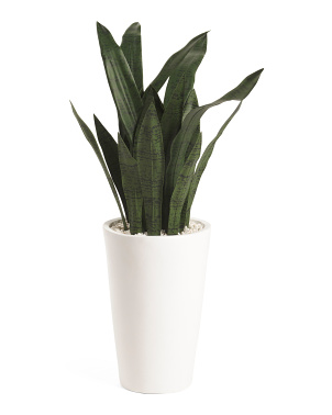 32in Snake Plant In Matte Ceramic Planter
