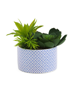 10in Succulents In Printed Pot
